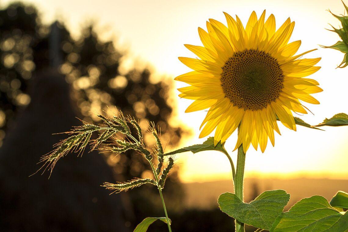 Your Invited: Masterclass -- The Sun Salutation Image
